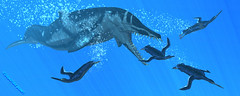 Squalodon- Orca of the Miocene 2009 (Craig T Dylke) Tags: fossil penguin shark dolphin whale whales extinct toothed miocene squalodon squalodontid