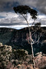 we may yet get what we deserve. (nosha) Tags: beauty nikon australia bluemountains pm 2008 d300 18200mm nosha australia2008
