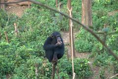 DSC_1357 (aquaboy24) Tags: africa sierraleone westafrica freetown