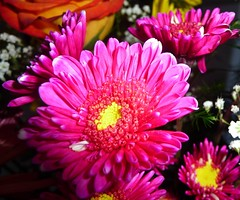 HAPPY FLOWERS ! (picolojojo) Tags: pink flowers flower color nature fleur colors rose yellow fleurs jaune petals couleurs petal panasonic soe couleur ptale naturesfinest ptales bej abigfave worldbest flickrdiamond theunforgettablepictures concordians theperfectphotographer goldstaraward theperfectpinkdiamond