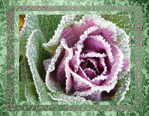 rose_frozen