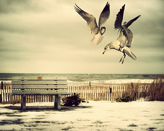 Dancing Gulls(Front Page) (by dog ma)