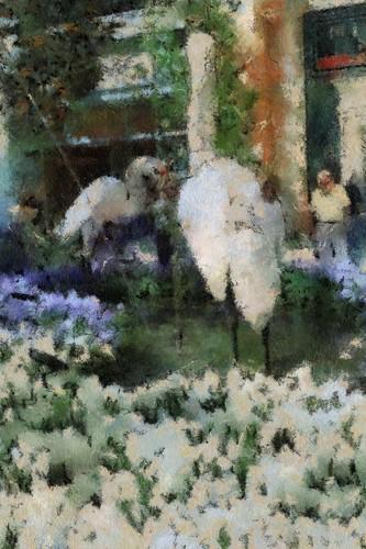 Cezanne birds
