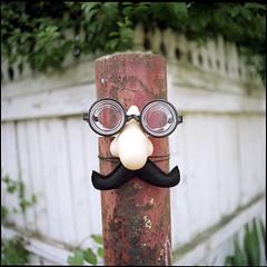 (Ansel Olson) Tags: 6x6 mamiya tlr film face fence mediumformat print nose glasses fuji post pro medium format mustache c330 160s 55mmf45