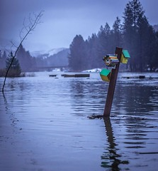 FLOODING IN CALIFORNIA / Feather River Over It's Banks (The VIKINGS are Coming!) Tags: flood storms rivers avalanche portola california sierra nevada mountains snowpack torrential downpour homeless drought forest alpine superstorm