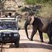The Elephants of Tarangire