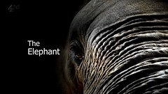 Inside Natures Giants   The Elephant   S01E01 (29th June 2009) [HDTV 720p (x264)] preview 1