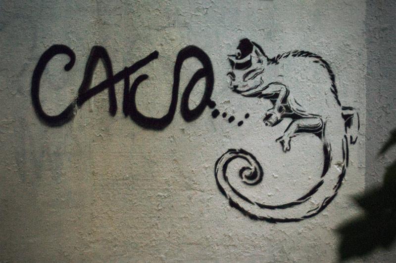 catso_hameleon2