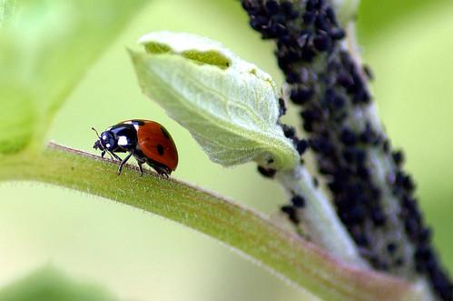 Organic Standards มาตรฐานเกษตรอินทรีย์ Organic Pest Control