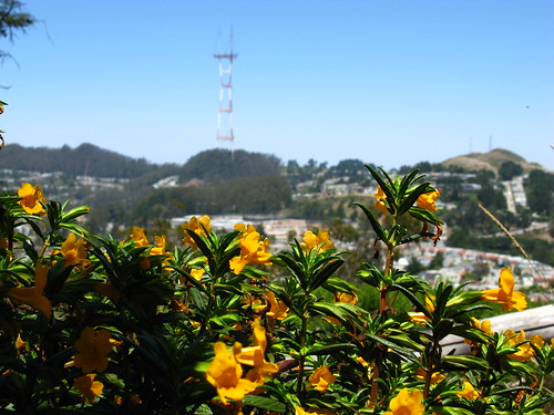 From/on Mount Davidson