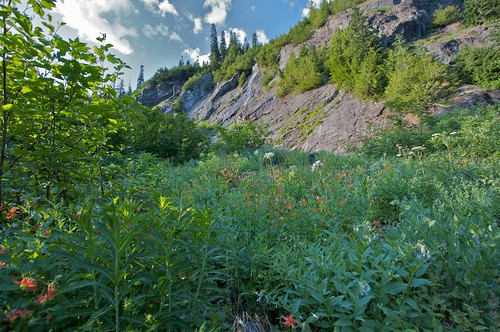 Lots of wildflowers close to Snow Lake