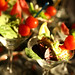 "Martini Salad Display at the Foundry Park Inn & Spa • <a style=""font-size:0.8em;"" href=""http://www.flickr.com/photos/40929849@N08/3771703507/"" target=""_blank"">View on Flickr</a>"