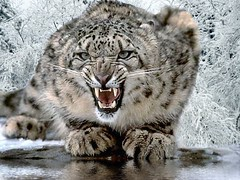 snow leopard issues