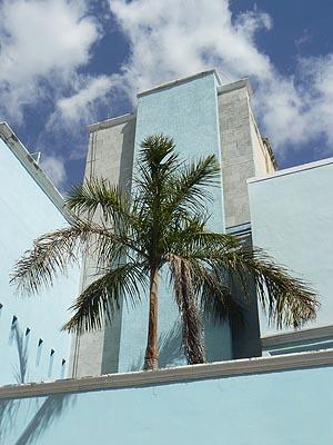 palmier dans une maison bleue.jpg