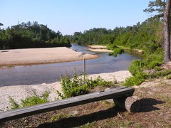 Little Escambia River AL (wolfbayplayer) Tags: tz1 wolfbayplayer