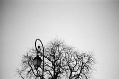 Toupet ((stephenleopold)) Tags: boulogne arbre lampadaire sommet ilfordfp4 vgtal marche2 chinoncm4 extrmit ruedelatourelle crve7
