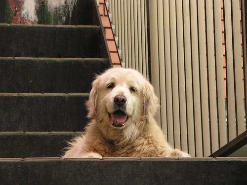 犬@杉並区