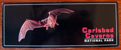 Excellent bat postcard