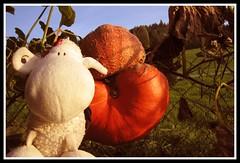 Pumpkin Brain (Shaun_Sheep) Tags: sheep shaun monstrosity freakish splat pumpkinbrain