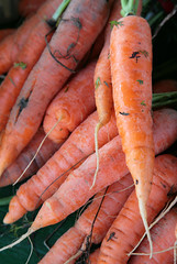 Carrots (peterkelly) Tags: orange ontario canada digital downtown farmersmarket guelph harvest vegetable canadian carrot northamerica carrots root