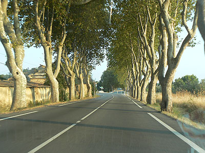 route aux platanes.jpg