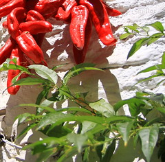 Red Hot Pepper (S@ilor) Tags: red espaa hot geotagged pepper spain mediterranean nevada sierra andalusia andalusien pampaneira whitevillage losalpujarras southofspain silor geo:lat=369407 geo:lon=3359692