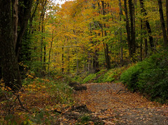 Down a mountain path (Minkum) Tags: trees fall leaves massachusetts foliage mountgreylock mywinners diamondclassphotographer flickrdiamond travelsofhomerodyssey