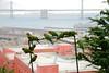 Flock of parrots on a pipe (~dgies) Tags: sanfrancisco city canon eos all pipe parrot baybridge perched telegraphhill parrots greenparrot cherryheadedconure 500d aratingaerythrogenys redmaskedparakeet tamron18270 tamronaf18270mmf3563diiivcldasphericalif t1i