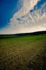 On the road (Marc Benslahdine) Tags: lumire champs vert bleu ciel agriculture nuages campagne lightroom recolte tamronspaf1750mmf28xrdiii canoneos50d marcopix tripax marcbenslahdine wwwmarcopixcom wwwfacebookcommarcopix marcopixcom