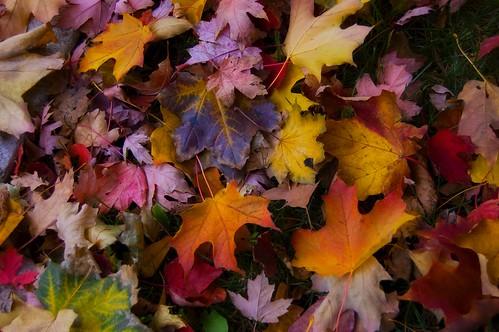281:365 Fallen leaves