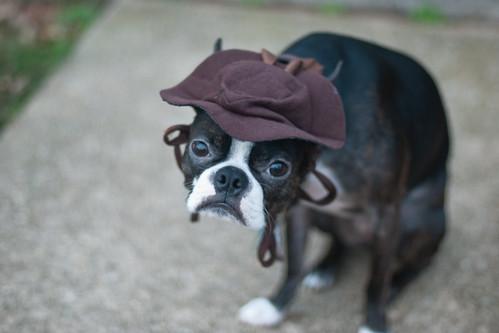 Quark and his hat