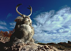 Warrior Wabbits of the West (Ph0tomas) Tags: newmexico landscape rabbits jackalope lepuscornutus