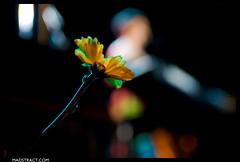 080_amandapalmer_dank09 (Danko | madstract.com) Tags: livemusic statetheatre fallschurch dresdendolls amandapalmer nervouscabaret whokilledamandapalmer