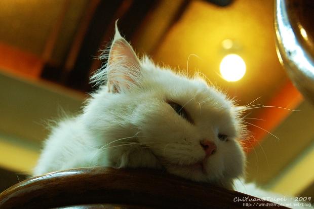 [叮叮]Cat。高處的慵懶