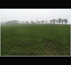 Line of Trees Shrouded in Mist in Crisscrossed Green Field - Tayside Scotland (Magdalen Green Photography) Tags: trees landscape scotland moody scottish eerie greenfield tayside crisscrossed lineoftrees scottishlandscape shroudedinmist dsc4392 mistyscene coolcurves crisscrossedgreenfield