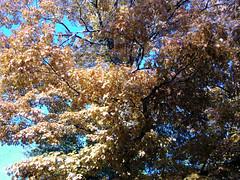 Fall Colors Boulder   DSCN0539