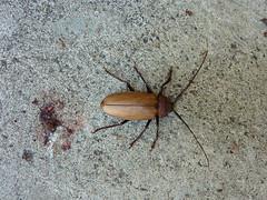 big bug/beetle, 122/365