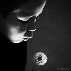 Breath in light (- FREDERIC MARS -) Tags: autumn light boy white black night automne kid noir child lumire breath son dandelion souffle prodigy enfant nuit blanc lo garon fils pissenlit artofimages bestportraitsaoi elitegalleryaoi
