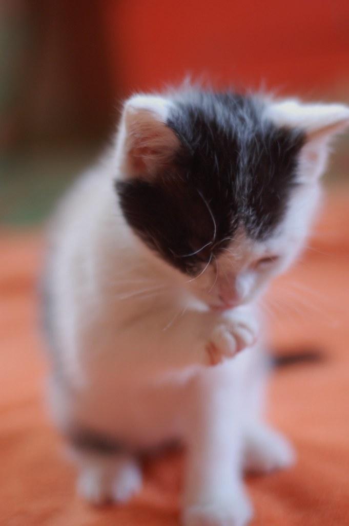 Ira's precious paw.