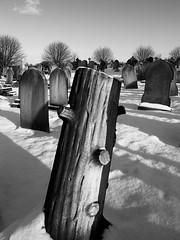 Petrified (djemde) Tags: nottingham rock cemetary burial graveyardgraveyardsnowengland