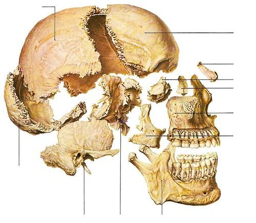 osteology_1