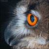 0926 The eye of the owl