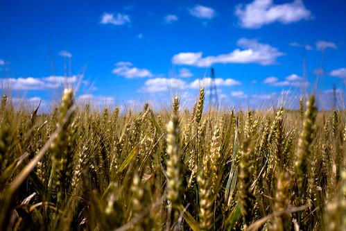 http://farm3.static.flickr.com/2660/3715569167_7e978e8319.jpg