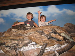 eagles in their nest: high desert museum