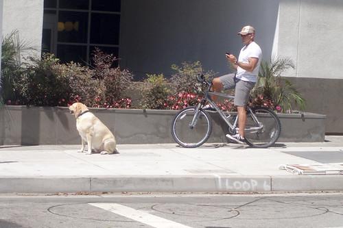 BikingTheDog