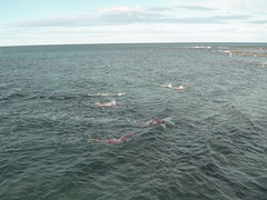 018.Numerous swimmers c. 15 minutes (don.warner) Tags: lorne piertopub winterpiertopub