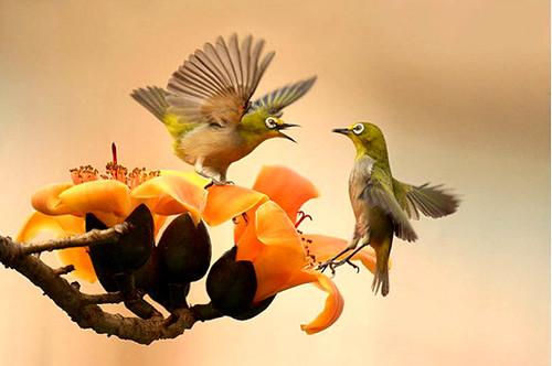 3810453887 04bfbdac37 Beautiful Birds   The Splash of Colors!!!