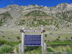 Wyoming's Wildlife - Wild Sheep and Wild Fire (J. Stephen Conn) Tags: canyon wyoming windriver wy fremontcounty