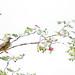 Birds Wals: August 30