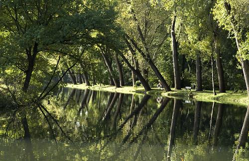 spiegelbomen